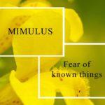 MIMULUS BACH FLOWER REMEDY