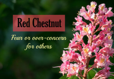 RED CHESTNUT BACH FLOWER